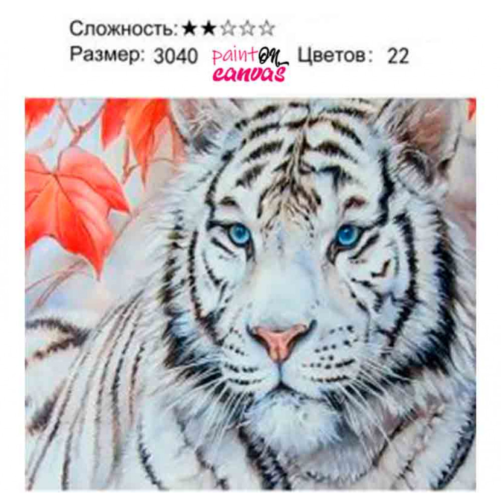 Белый тигр 30х40 картина по номерам