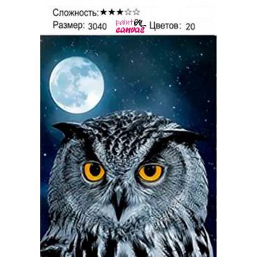 Ночная сова картина по номерам 30х40