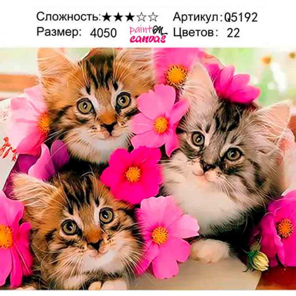 Три котёнка 40х50 раскраска по номерам