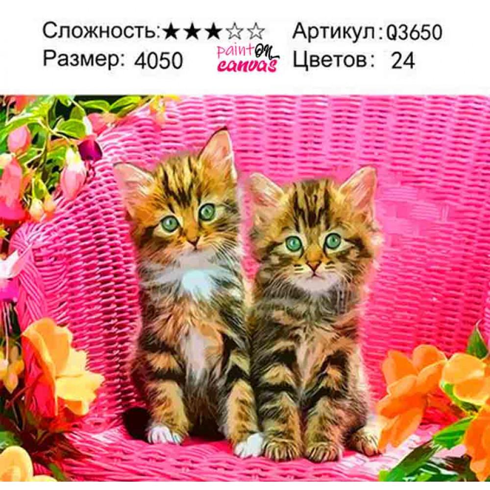 Котята 40х50 картина по номерам