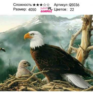 Белоголовый орлан картина по номерам 40х50
