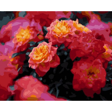 Роза Мари Кюри картина по номерам 40х50