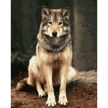 Волк картина по номерам 40х50