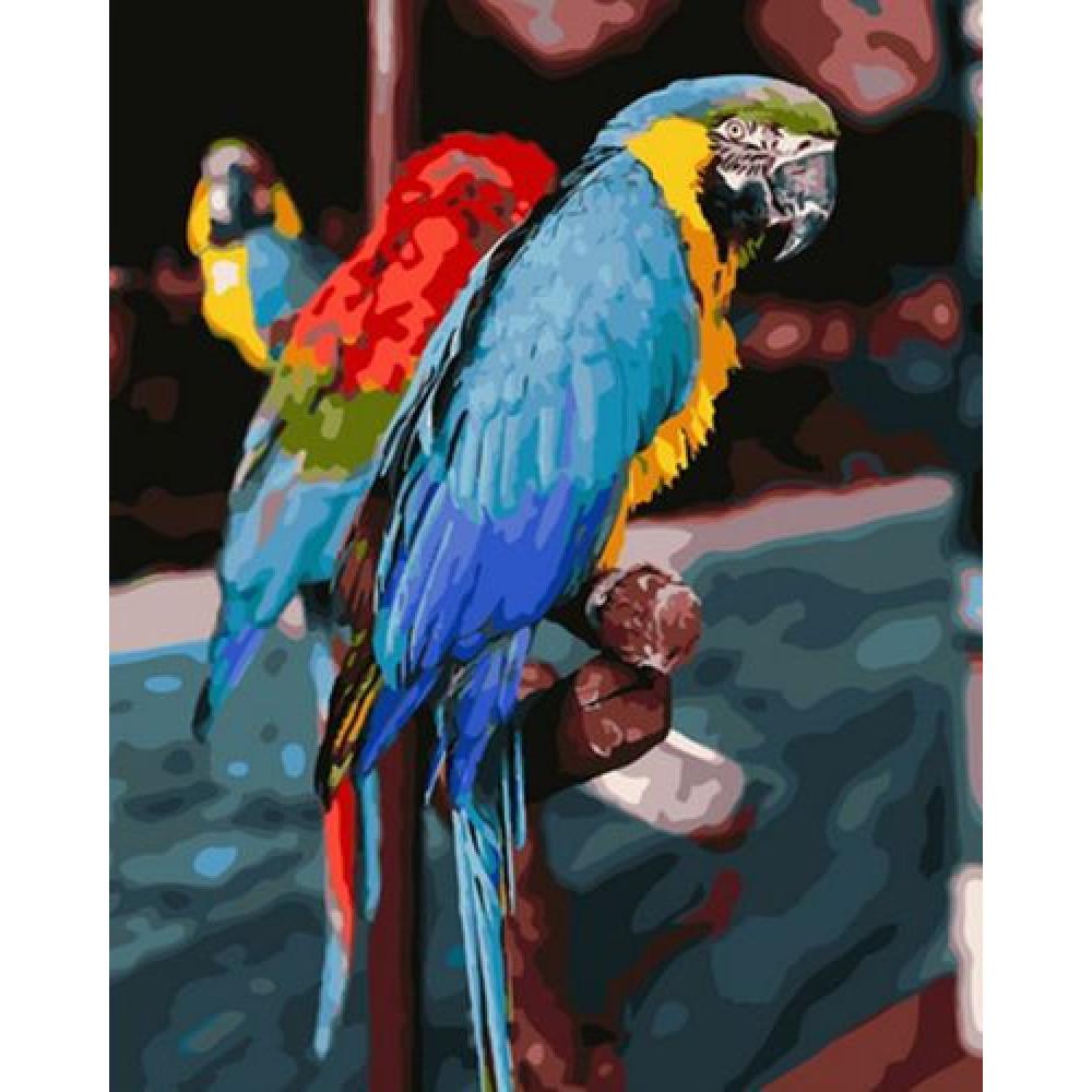 Попугаи ара картина по номерам 40х50