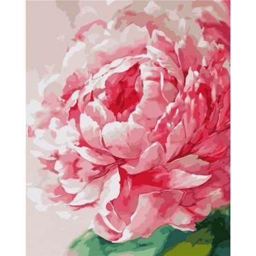 Розовая пиона картина по номерам 40х50